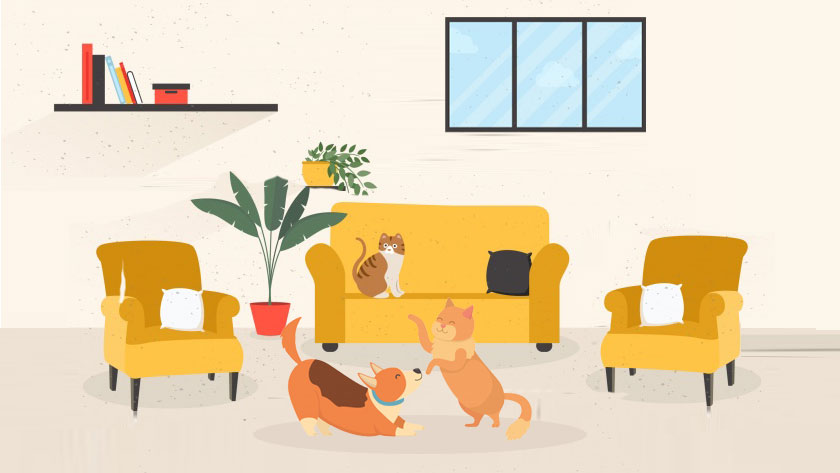 moving with pet tips